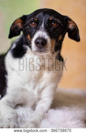 Dog Black And White Posing With Background Of Light Colors