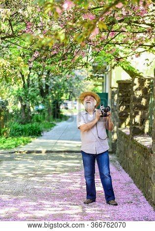 I Am A Spring. Happy Retirement. Man Tourist Use Camera Take Photo Of Cherry Blossom. Sakura In Full
