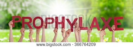 People Hands Holding Word Prophylaxe Means Prophylaxis, Grass Meadow