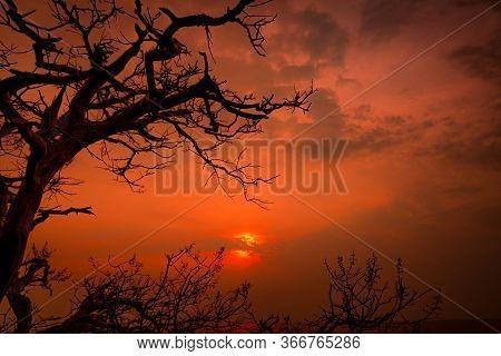 Beautiful Silhouette Leafless Tree And Sunset Sky Beside The Sea. Romantic And Peaceful Scene Of Sea