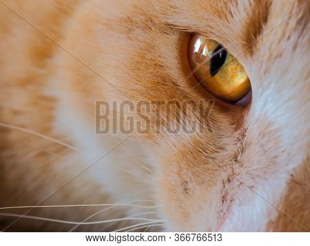 Yellow Eye Of A Red Cat Close-up. A Close Watchful Look At The Camera. Macro Shot Of A Cat's Eye.