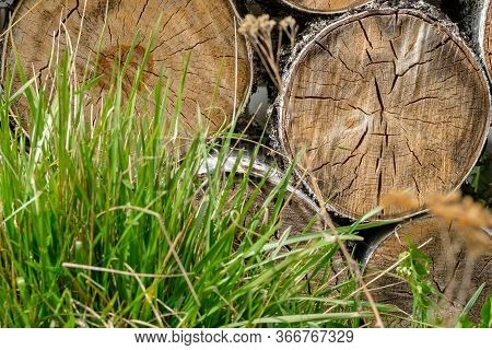 View Of The Ends Of Sawn Birch Logs Lying On Top Of Each Other Behind Green Blades Of Grass. The Tre