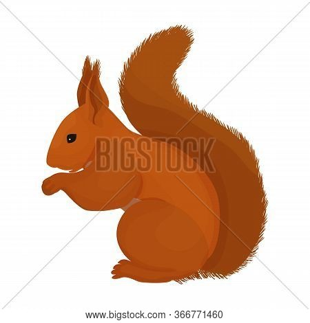 Squirrel Vector Icon.cartoon Vector Icon Isolated On White Background Squirrel.