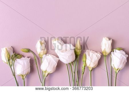 Row Of White Roses On Pink Background. White Rose Flowers With Stems And Leaves. In Row. Creamy Rose