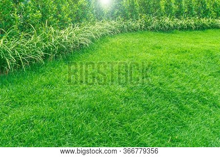 Landscape Design, Peaceful Garden, Green Garden And Lawn., Green Lawn, The Front Lawn For Background