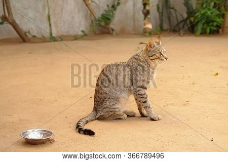 Image Of A Beautiful Long Small Hair Cat Sitting On Land ,beautiful Feline Cat At House, Close Up Po