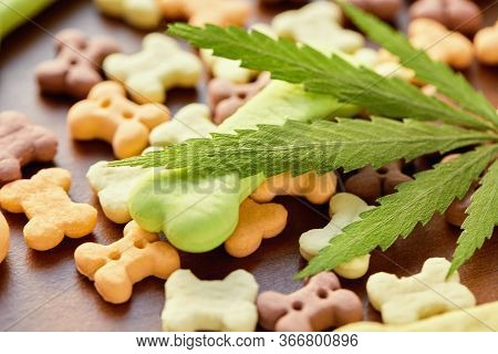 Close-up Bone Treat For Dogs And Green Hemp Leaf. Biscuits For Pets With Cannabis Content Cbd Cannab