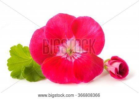 Red Pelargonium Flowers Isolated On White Background