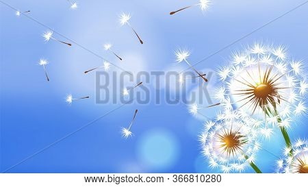 Realistic Dandelion. White Fluffy Flower, Flying Seeds On Blue Sky. Spring Summer Season Banner. Flo