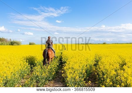 Young Woman Riding On A Brown Horse In Yellow Rape Or Oilseed Field With Blue Sky On Background. Hor