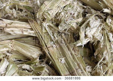Closeup of a cane pulp