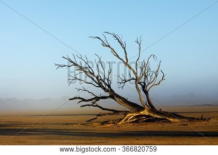 Scenic landscape with a dead tree in mist, Kalahari desert, South Africa