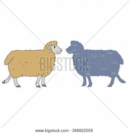 Cute French Farmhouse Sheep With Butcher Chart Vector Clipart. Hand Drawn Shabby Chic Style Country