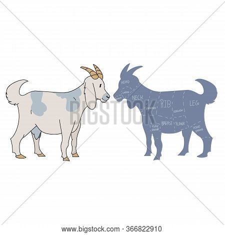 Cute French Farmhouse Goat With Cut Chart Vector Clipart. Hand Drawn Shabby Chic Style Country Farm