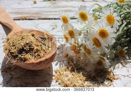 Dried Chamomile Medical Herb In A Wooden Spoon And Fresh Daisy Flowers On White Shabby Background. H