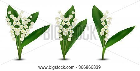 3d Realistic Lilly Of The Valley Flowers. Fragrant Lily Of The Valley On White Background. Bunch Flo