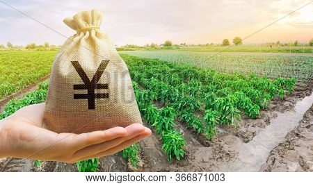 Farmer Holding A Money Bag On The Background Of Peppers Plantations. The Development Of Agriculture