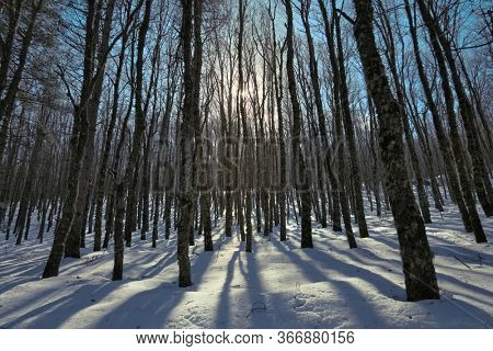 winter forest backlit trees in the Nebrodi Mountains of Sicily natural landmark
