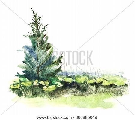 Watercolor Sketch Of Summer Landscape. Pine Tree And Blurry Vegetation As Green Island Isolated On W