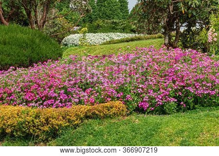 Variety Flower Garden, Colorful Cultivated Plants, Selective Focus. Nature.