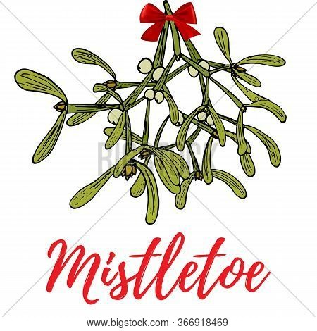 Hand Drawn Mistletoe Sprigs With Berries And Red Bow On White Background For Christmas Cards And Dec