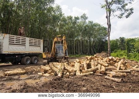 KHAO LAK, THAILAND - 16 MAY 2020: Logging. Logs from cut down forest loaded onto truck. Deforestation is a major environmental problem
