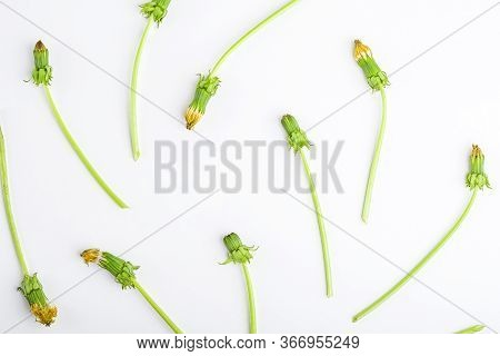 Spring Flowers Composition. Creative Pattern Of Wilted Flowers Dandelions On White Background. Roman