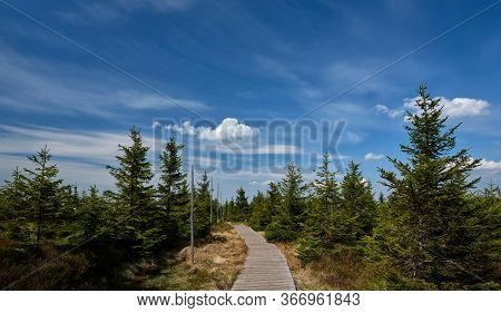 Wooden Walkway On Mountain Ridge With Small Trees, Jeseniky, Czech Republic. E3 Walking Path Section