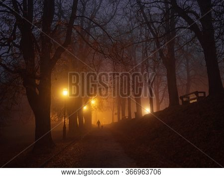 The City Park Is Shrouded In Fog In The Early Autumn Morning