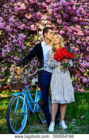 Transportation And Travel. Sakura Season. Sakura Tree Blooming. Girl And Man Retro Bicycle Sakura Tr