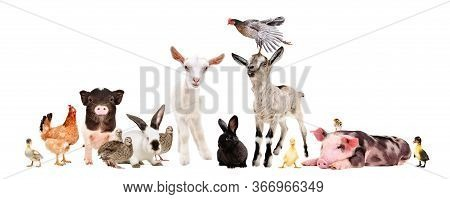 Group Of Farm Animals Together Isolated On White Background