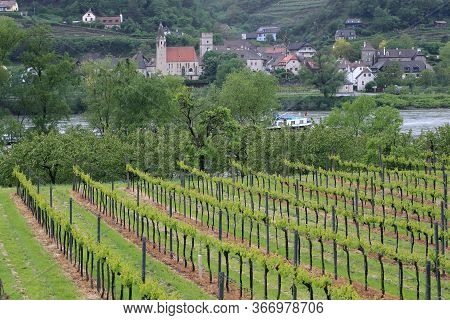 Schwallenbach, Austria - May 12, 2019: These Are Vineyards On The Banks Of The Danube In The Wachau