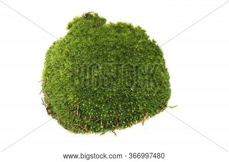 Piece Of  Green Moss Isolated On White  Background. Fragment Of Fresh Forest Flora Moss, Top View.