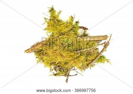 Piece Of  Yellow Moss And Forest Tree Twigs Isolated On White  Background. Fragment Of Fresh Forest
