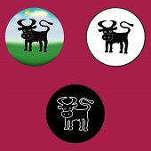 Three vector illustration of the bull on different a background poster