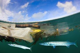 Plastic pollution floats on ocean surface with fish underwater