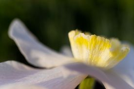 Yellow Flower Daylily. Macro Photo. The Concept Of Summer Flowering, Growing Flowers, Gardening. Ima
