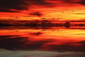 Reflection Of Sunlight Over Silhouette Birds Flying On Sea And Sunset Sky