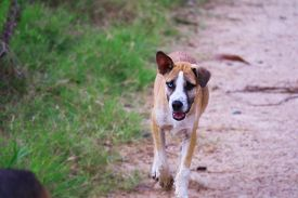 The Two-eyed Stray Dog Is Caused By Cross-breeding
