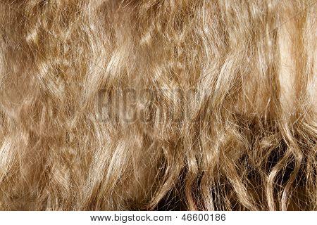 Womens Hair Texture