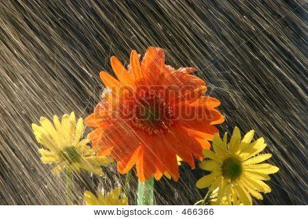 Regen auf Blumen