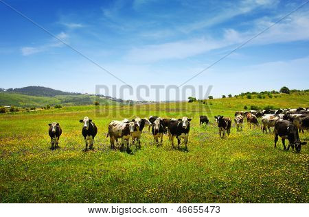 Beautiful rural landscape with vast green field and a herd of cows pasturing poster