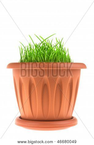 Flower Pot With Grass Isolated On White Background