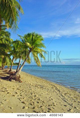 Fijian Beach And Palm Trees