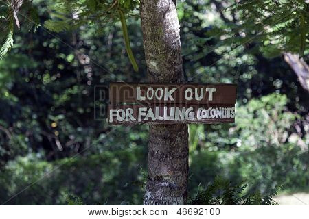 Look out for falling coconuts - sign in the park poster