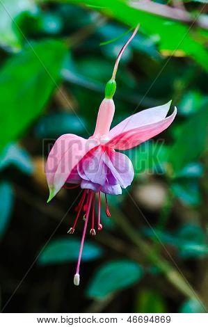 Dangling Flower