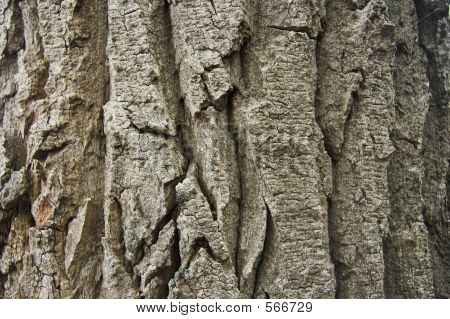 Tree Bark Texture Horizontal