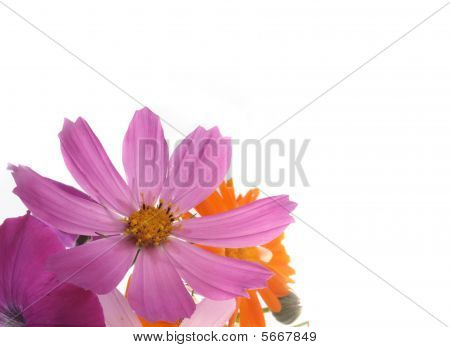 Background With A Lilac Flower