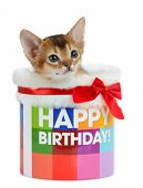 Kitten sitting in a Happy Birthday bucket isolated on white background poster