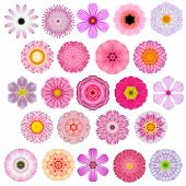 Huge Selection of Various Colorful Kaleidoscopic Mandala Flowers Isolated on White. Big Collection of flowers in Concentric shape pattern. Rose Daisy Primrose Sunflower Carnation Marigold Gerber Dahlia Zinnia Flowers in Red Yellow Orange Purple colors. poster